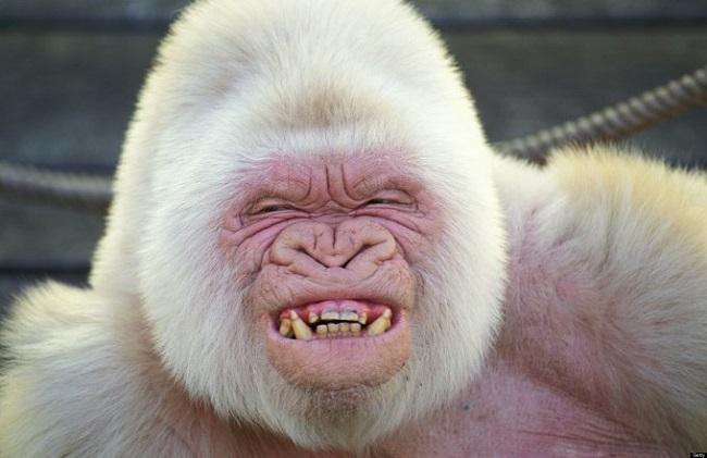 Удивительные белоснежные животные