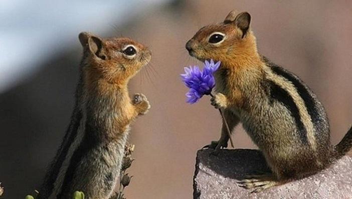 Любовь в мире природы: 25 милейших фото
