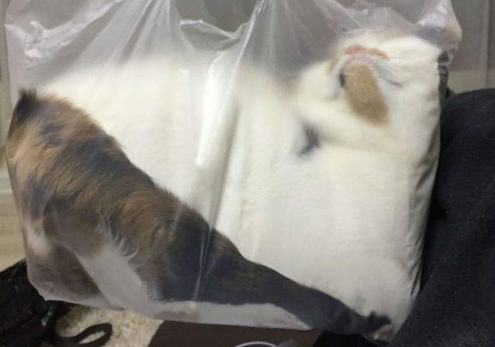 50 котов, которые думают, что они жидкость