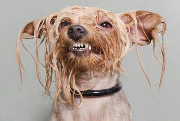 Мокрые и смешные: 40 фотографий животных после водных процедур