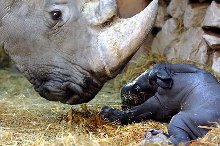 40 милых фото новорожденных зверушек