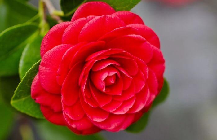Самые редкие и красивые цветы на планете, 35 фото