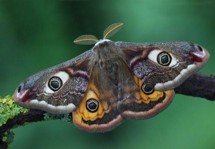 Факты о природе, которые впечатлят даже любителей энциклопедий