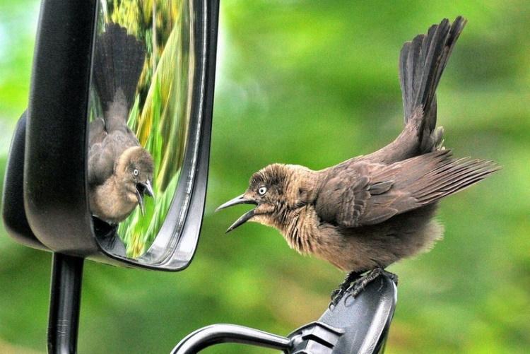 Уморительные снимки животных, которые увидели себя в зеркале
