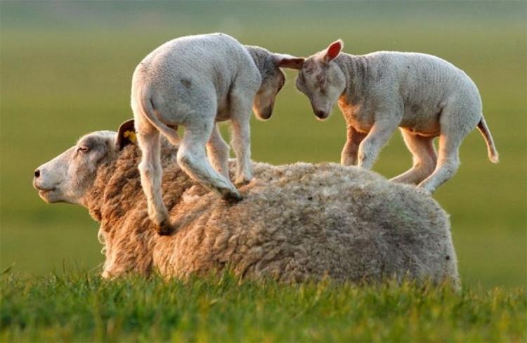 Самые милые фото мамочек и их чад из мира животных