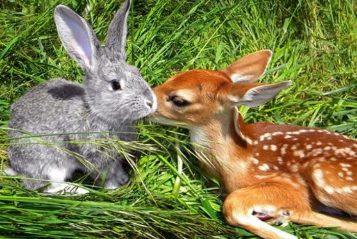 50 милых фотопримеров дружбы между животными