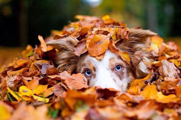 Животные, которым очень нравится эта осень, 35 фото